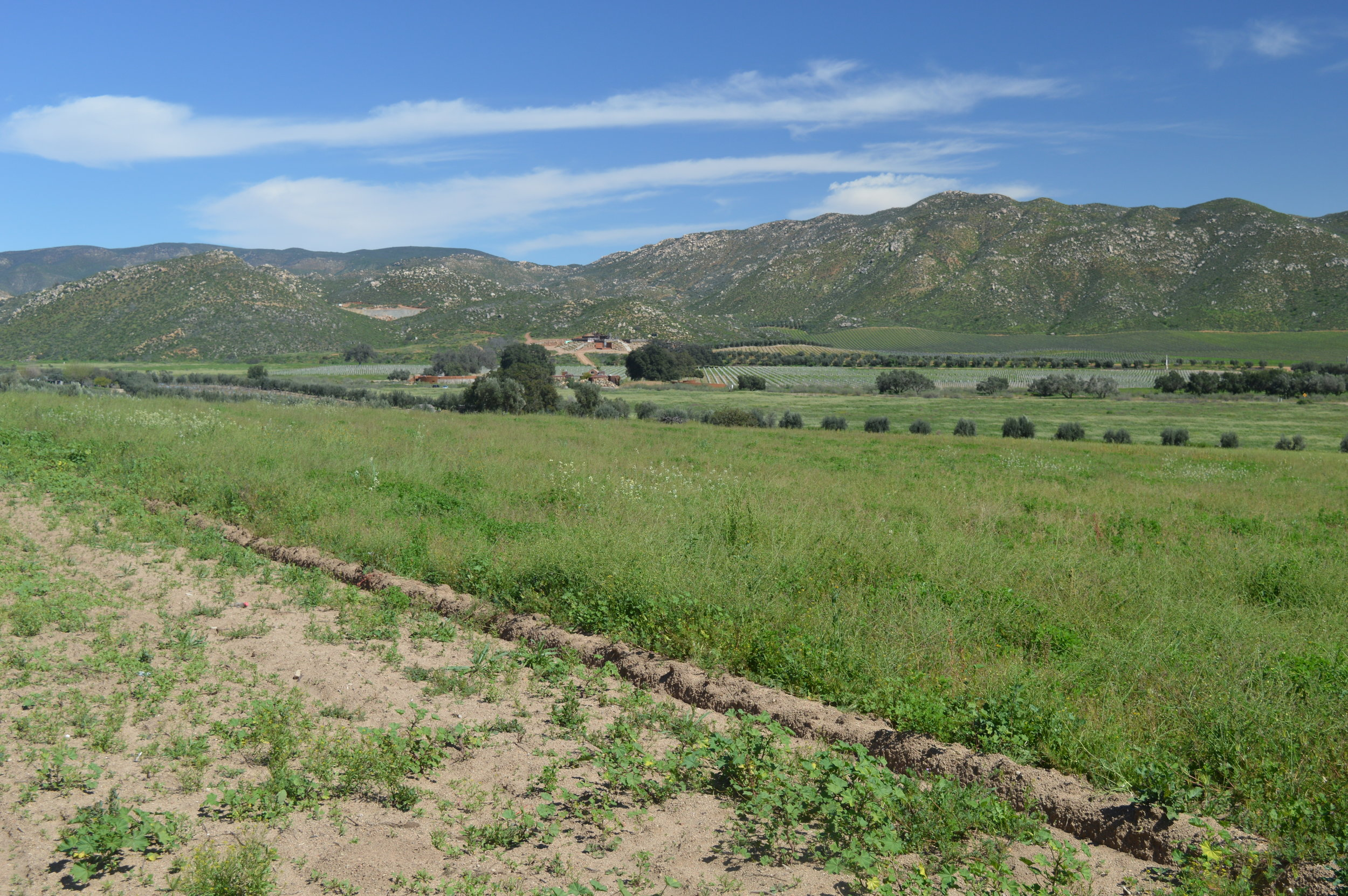 Valle de Guadalupe, Baja's wine country.