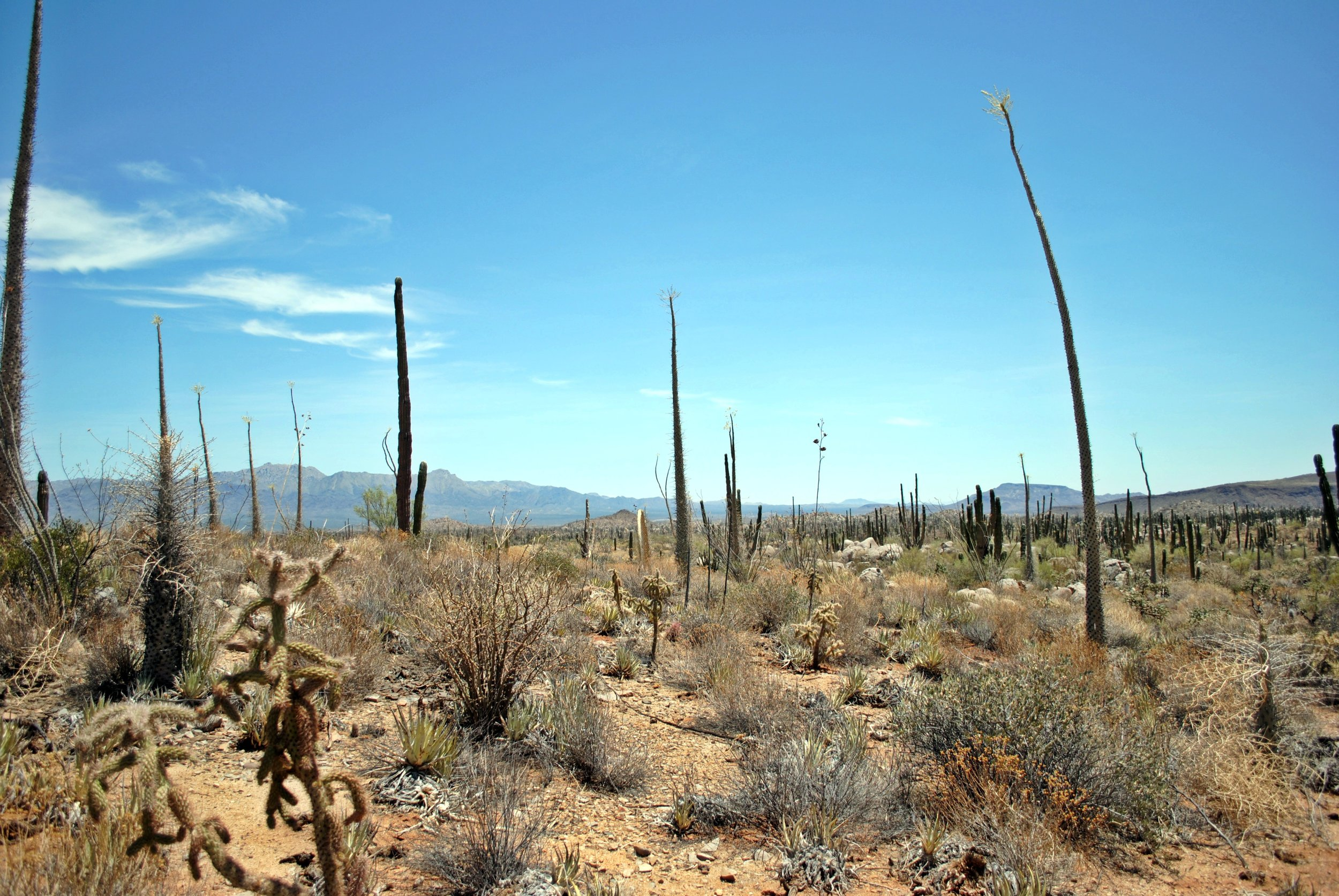 desert basin.JPG