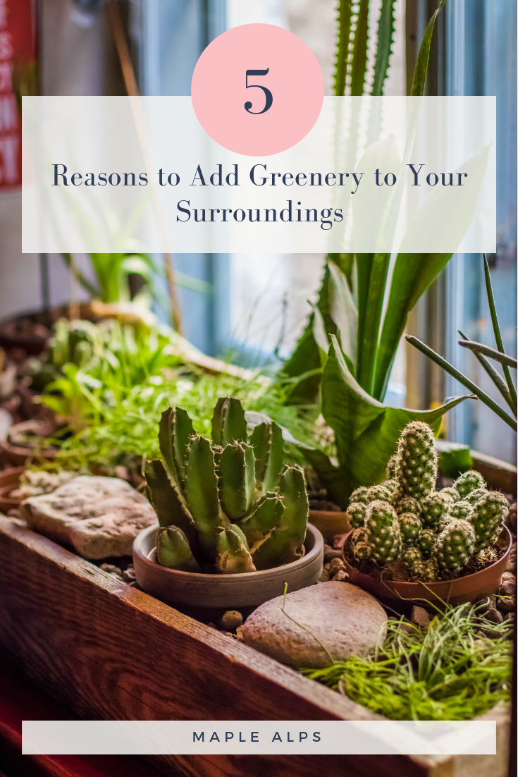 6 Reasons to Add Greenery to your Surroundings | www.maplealps.com