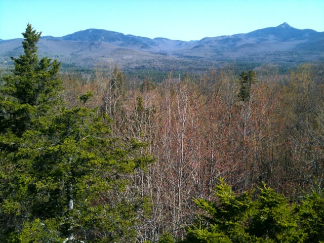 view from the tower north to the sandwich range: mt. paugus (left) and mt. Chocorua