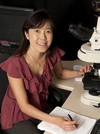 Tian-Li Wang, PhD   Professor of Pathology and Oncology  Faculty, Pathobiology Graduate Program