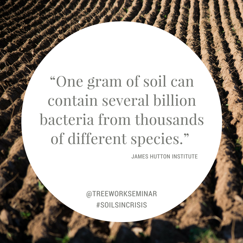 Soils in Crisis Quote 1.png