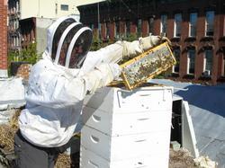 Bees_8676_MedRes-250x187.jpg