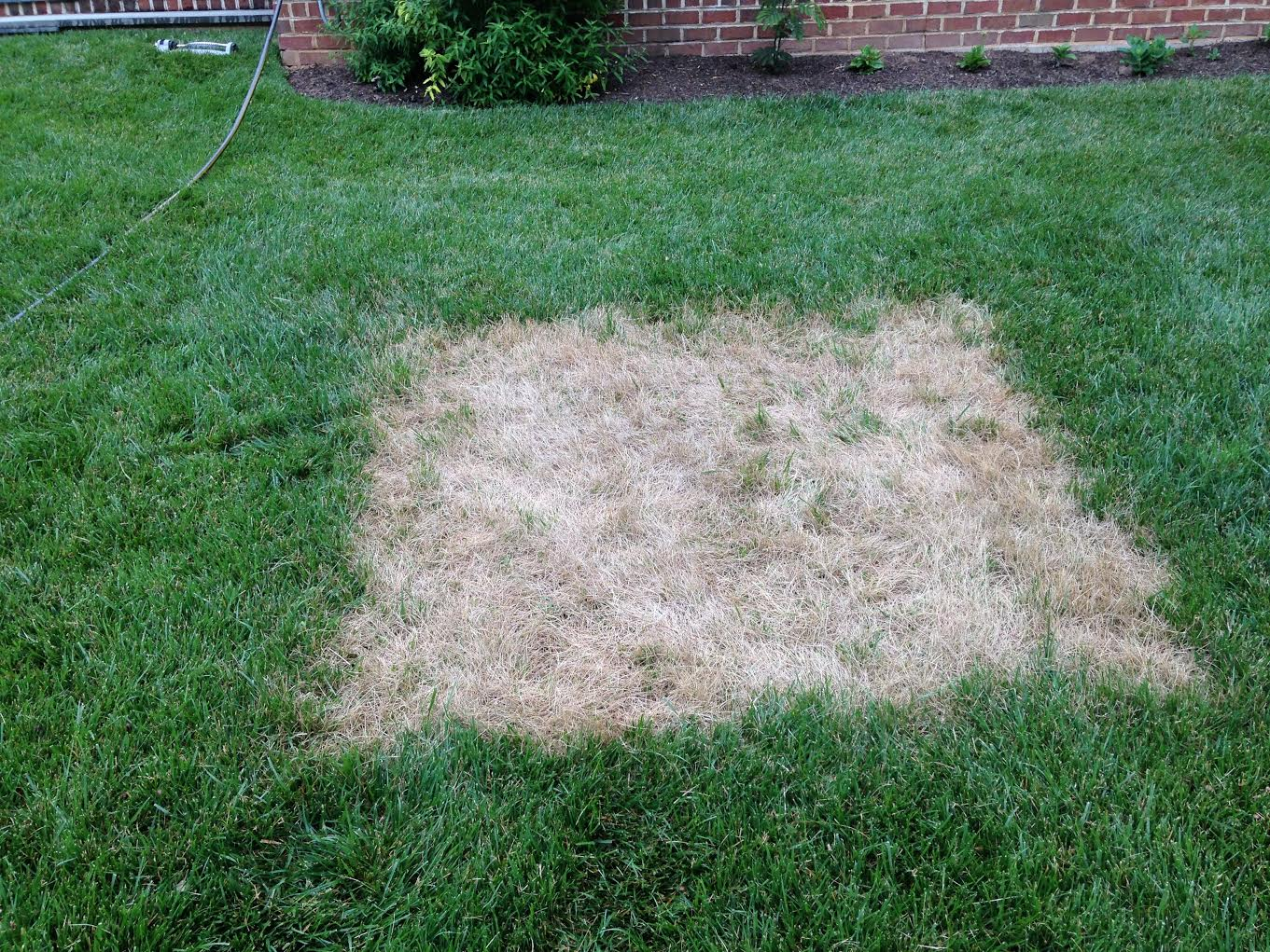 Damaged Lawn Square