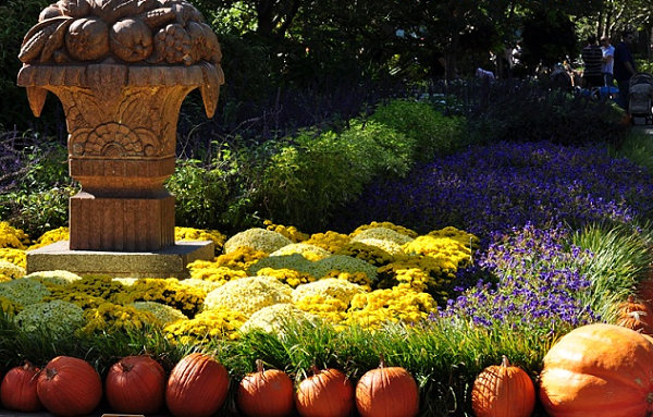 Pumkins-and-flowers-in-a-fall-garden.jpg