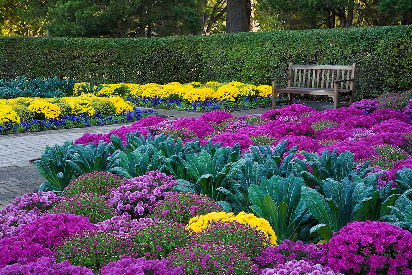 FL13237h-ilfp-Garden-with-bench-and-mums.jpg