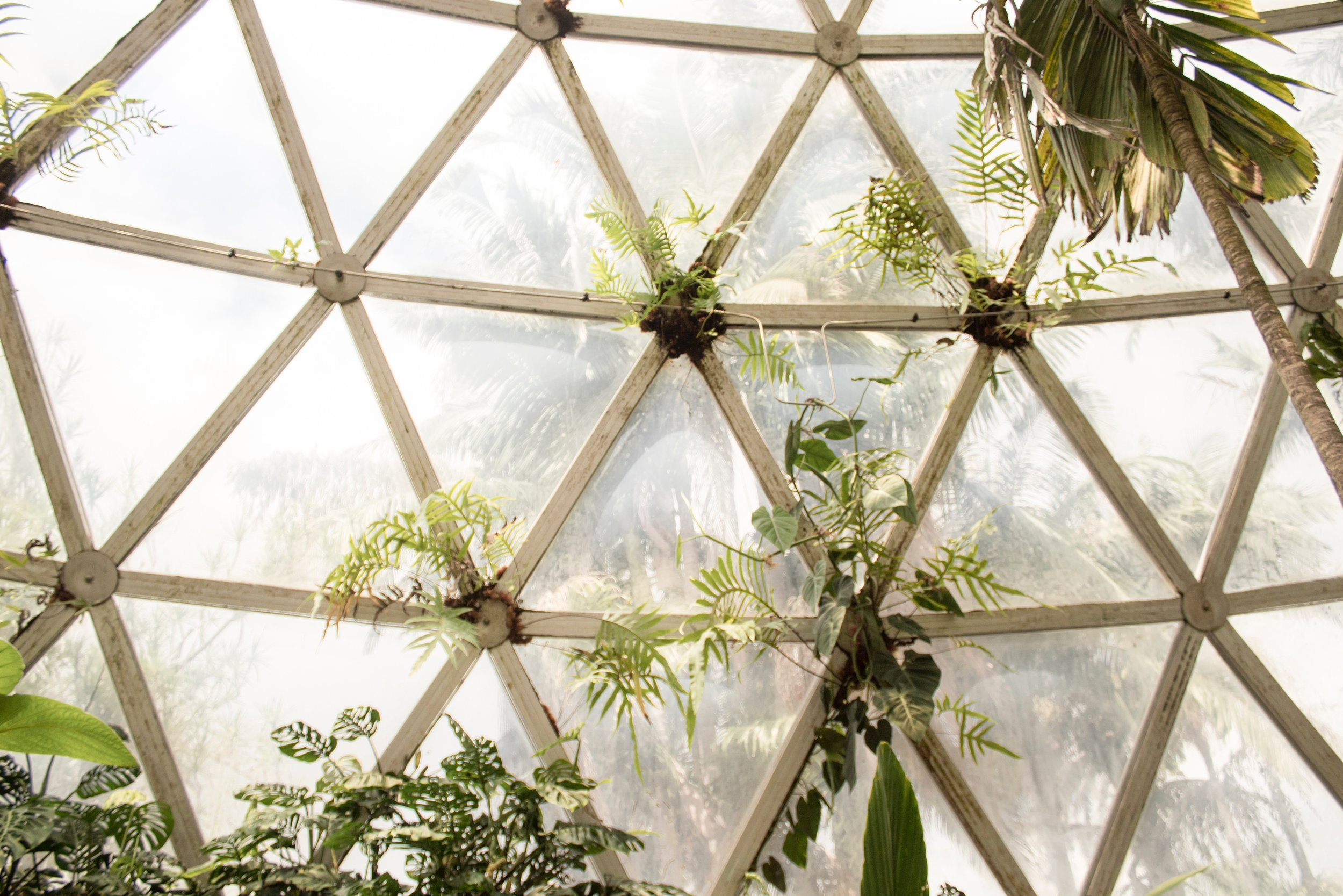 Latticed Window in Greenhouse