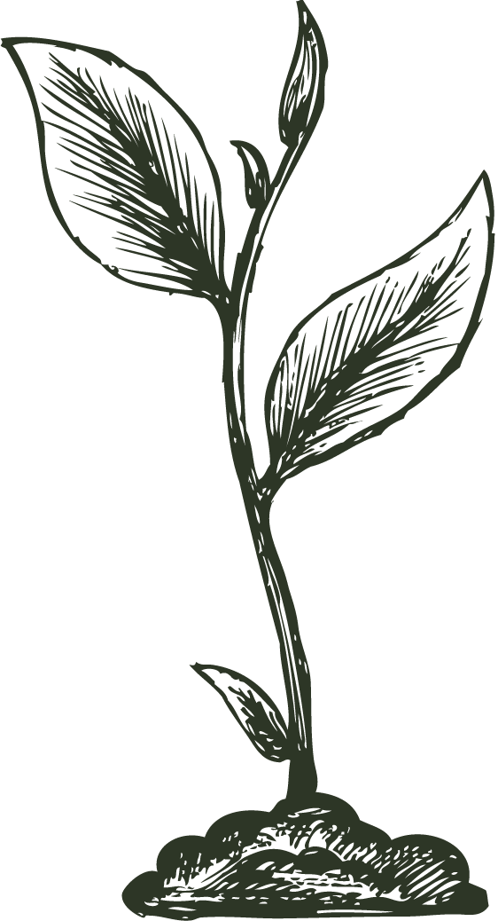 Sprout in olive green.png