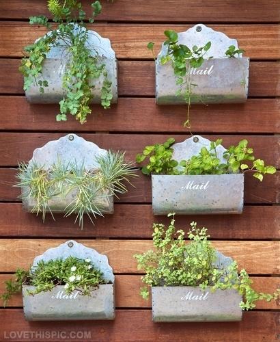 22516-Wooly-Pocket-Garden-Tips.jpg