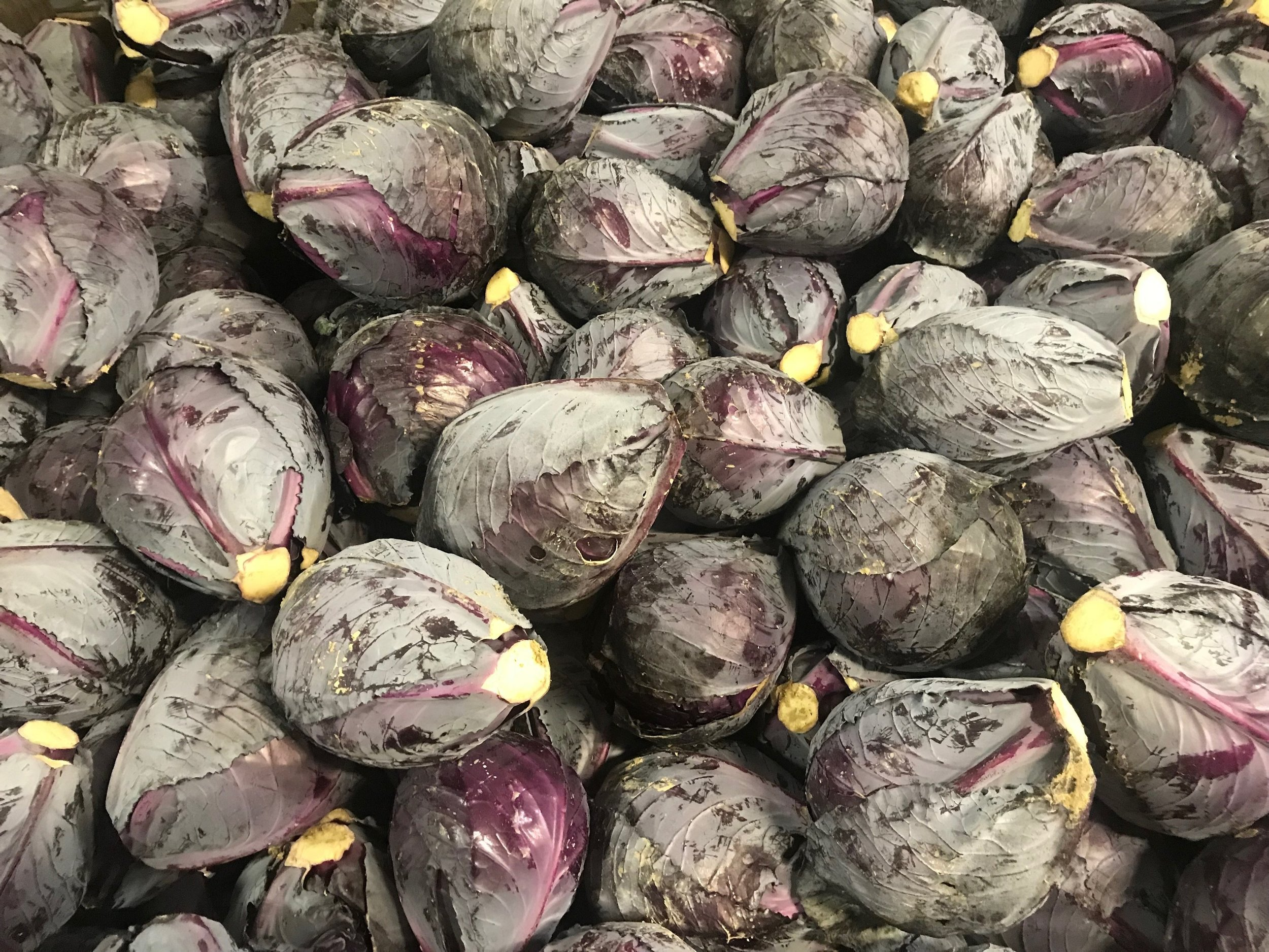 Red cabbage from our friends at Markristo Farm in Hillsdale, New York