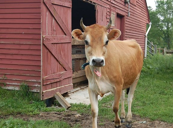 Smith Family Farm's offers organic, raw milk and their farm is only a 10 minute drive from Eagle Cliff.