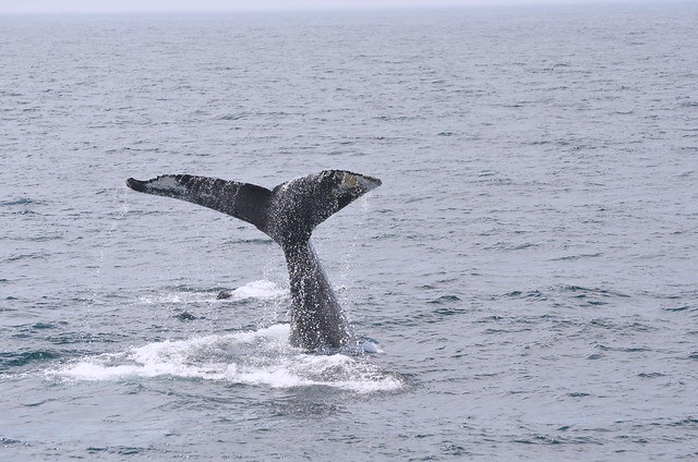 Whale Spotting in Maine