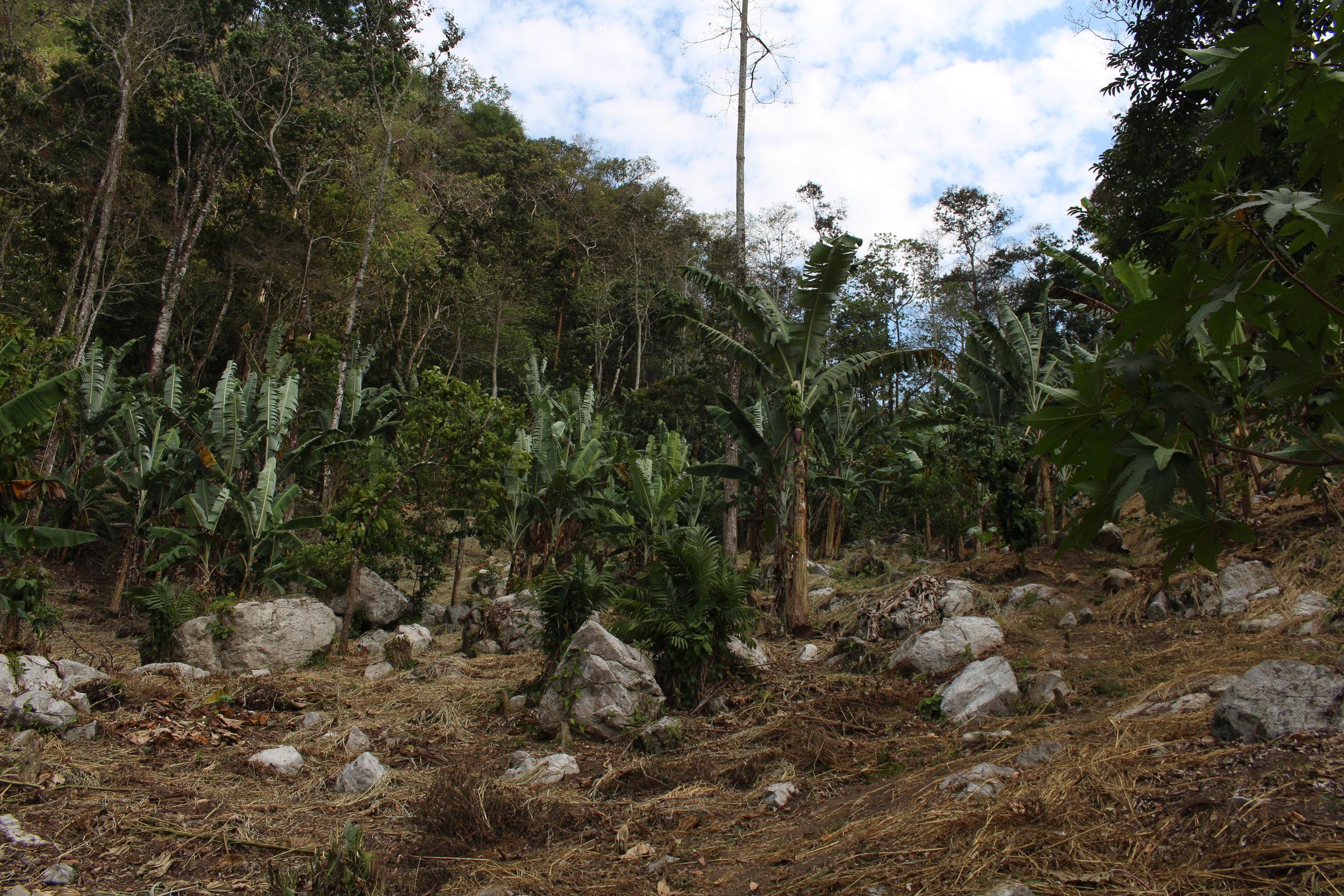 Deforestation is harming Honduras.