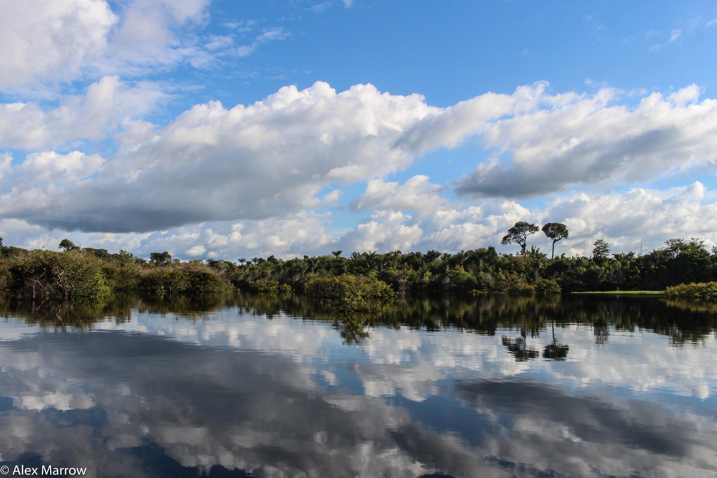 Juma Reserve, Amazon Rainforest