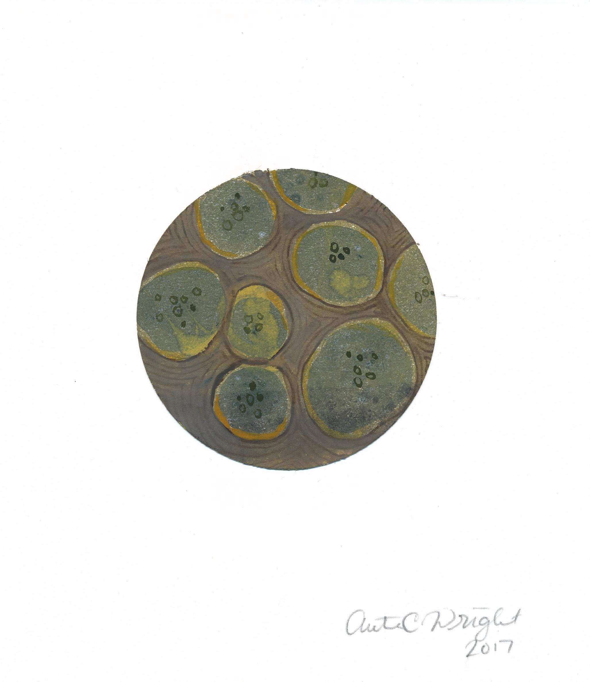 CircleS126.jpg