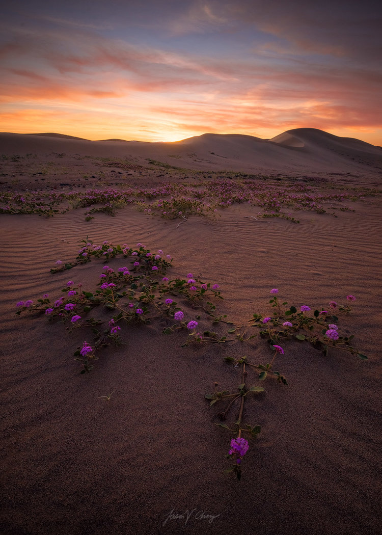 Barren Bloom