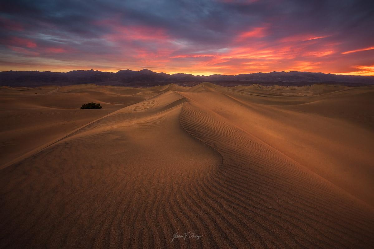 I Dream of Dunes