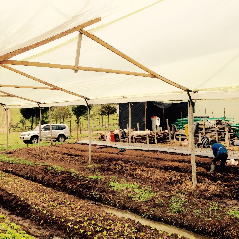 Biologische, kleinschalige landbouw in Colombia