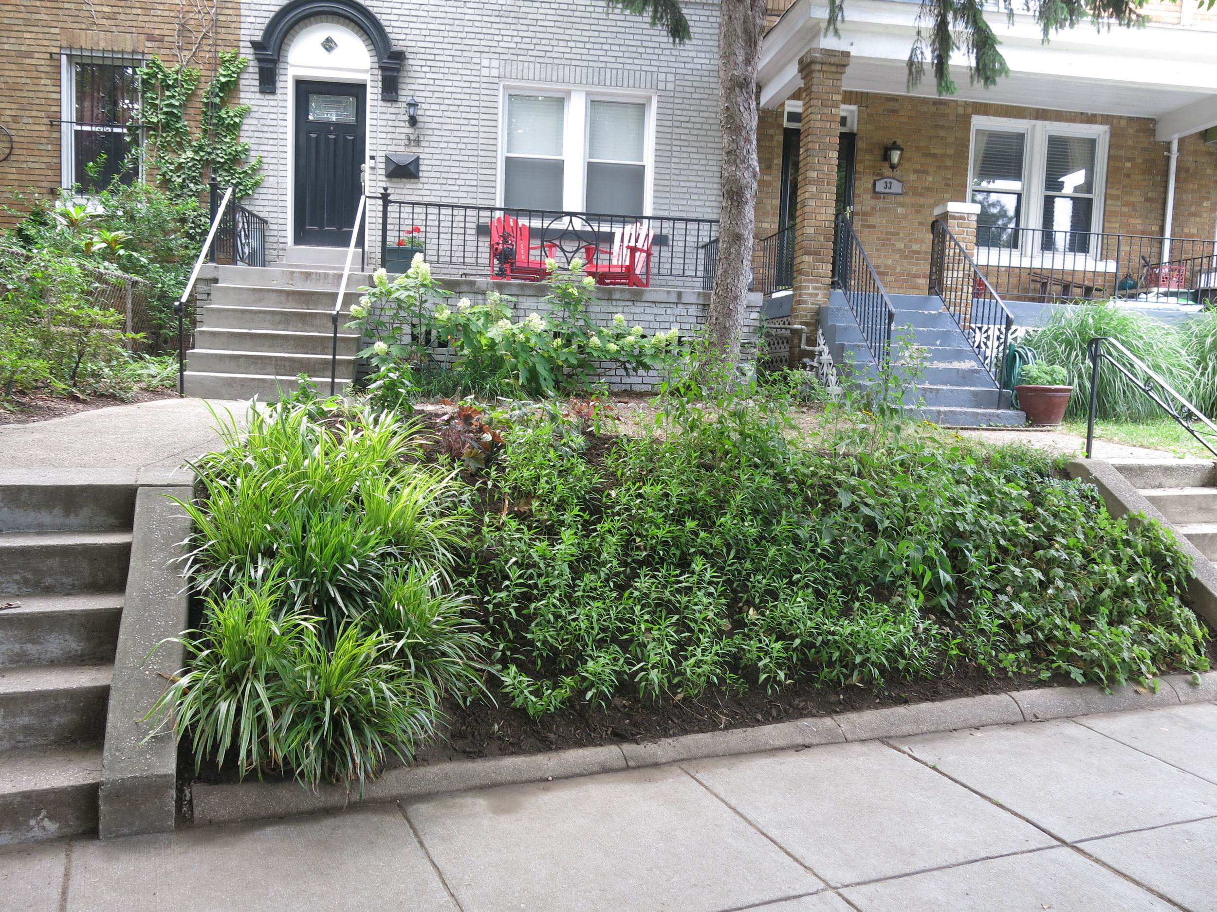 Get a BayScaping - Sign up for a free stormwater audit