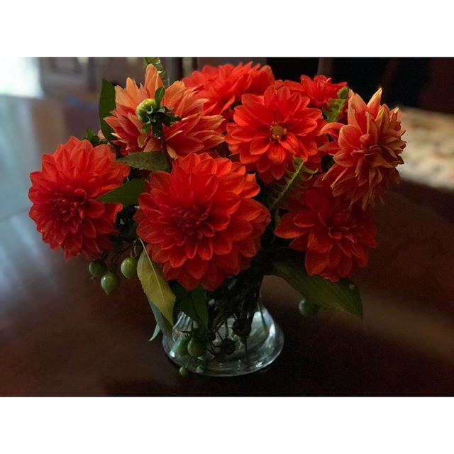 So little time left for the dahlias this year—and they could not be more beautiful!