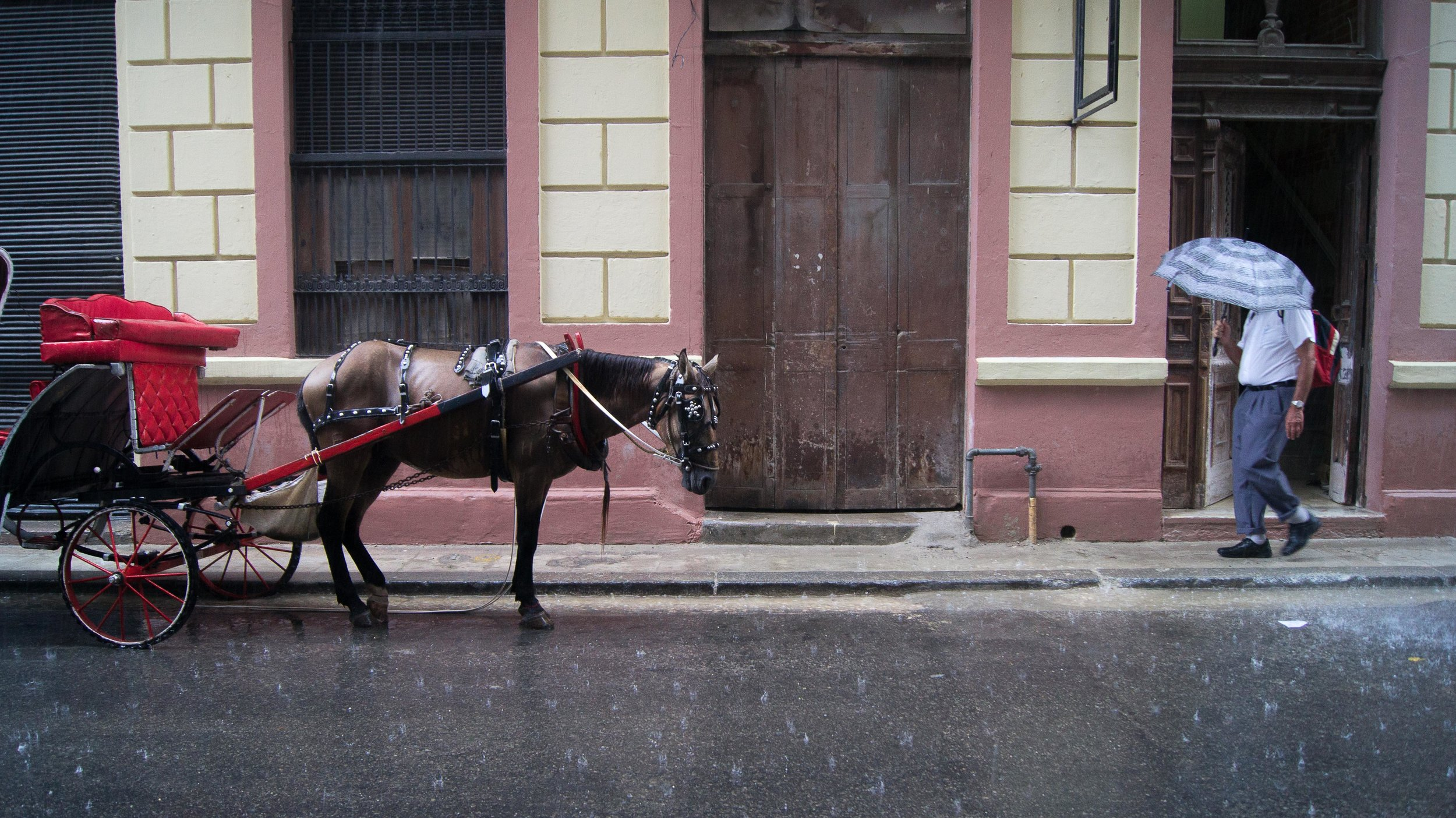 horseintherain.jpg