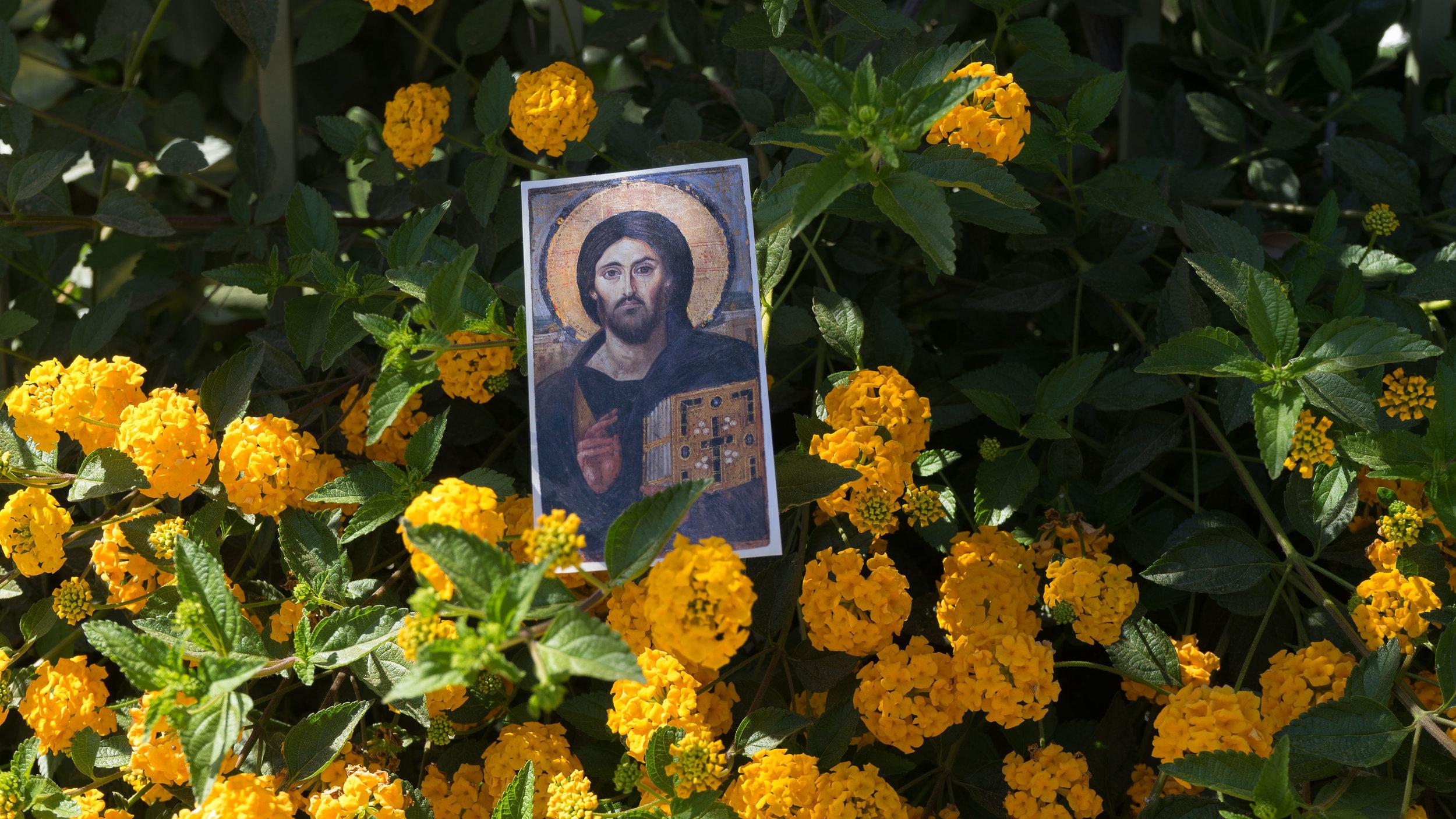jesusflowers.jpg