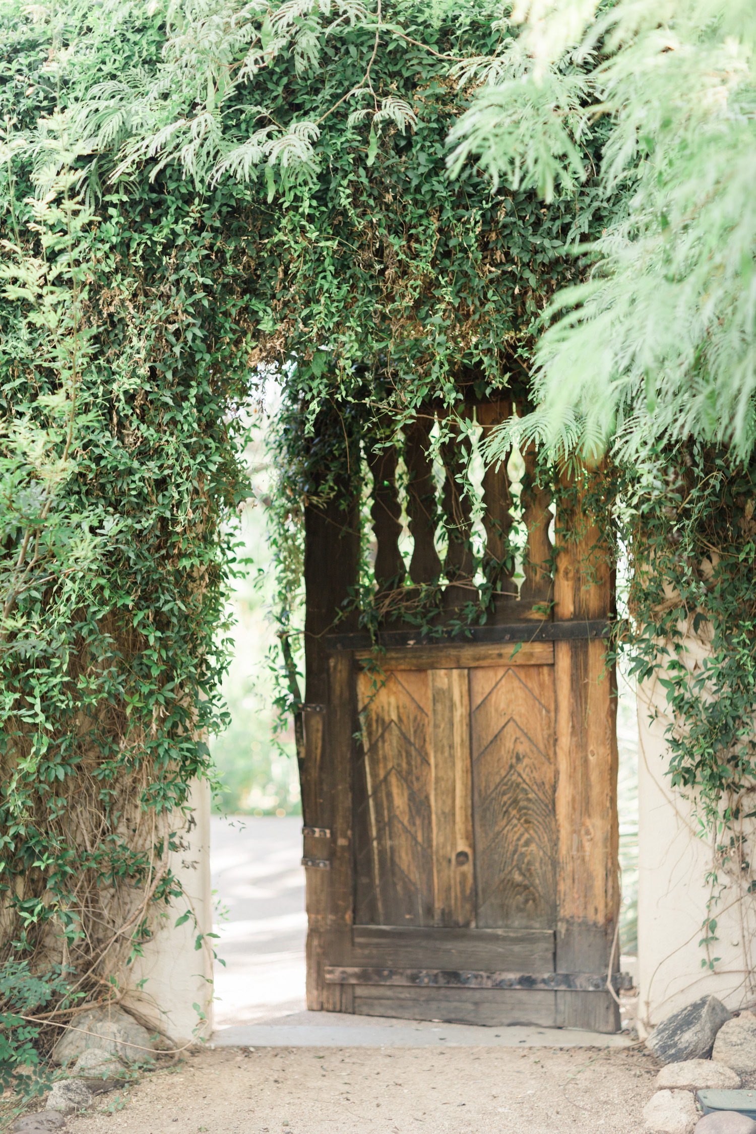 Old wooden door covered in vines at Tohono Chul Gardens