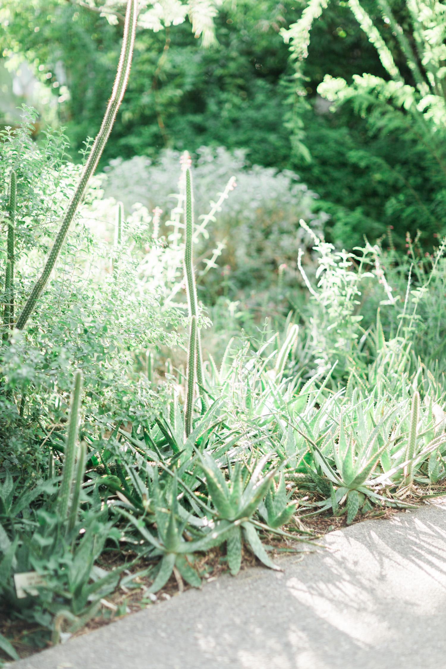Desert cactus, foliage and aloe vera plants along a pathway at Tohono Chul Gardens