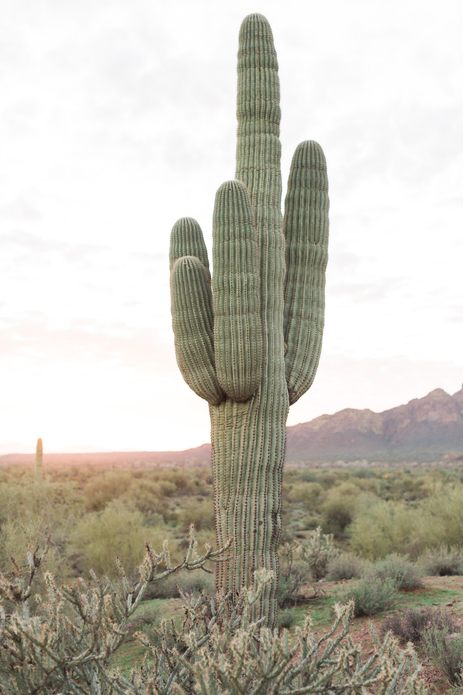 Cactus and saguaros with desert and mountain views in the background. Phoenix, Arizona wedding.