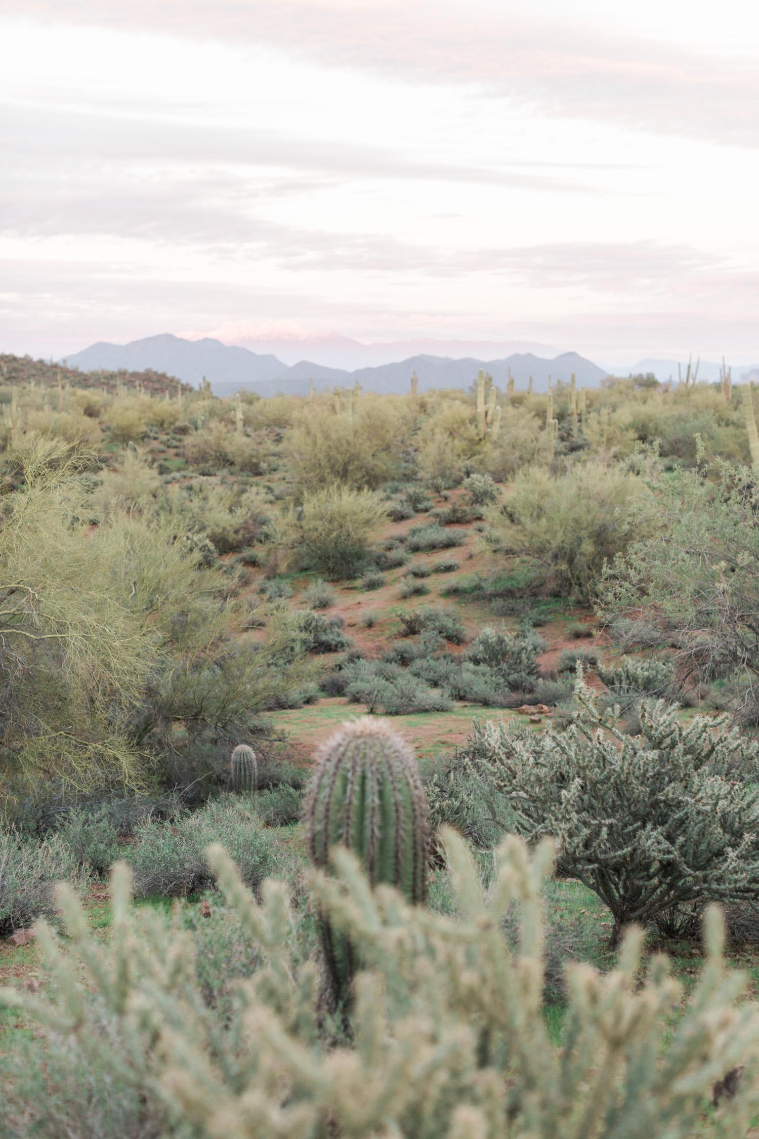 Phoenix, Arizona desert at sunset. Love the cactus in the foreground.