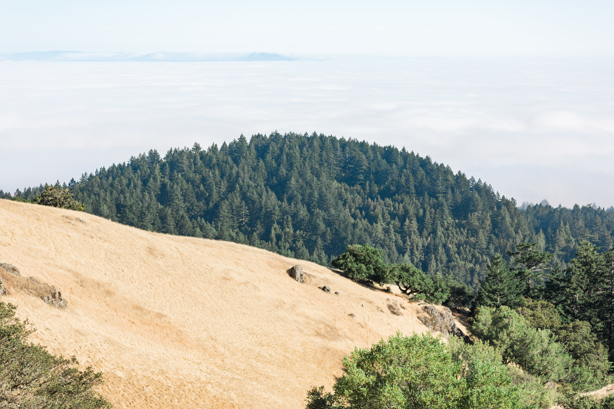 Fog settling over the city. View from the top of Mount Tamalpais in Mill Valley, CA