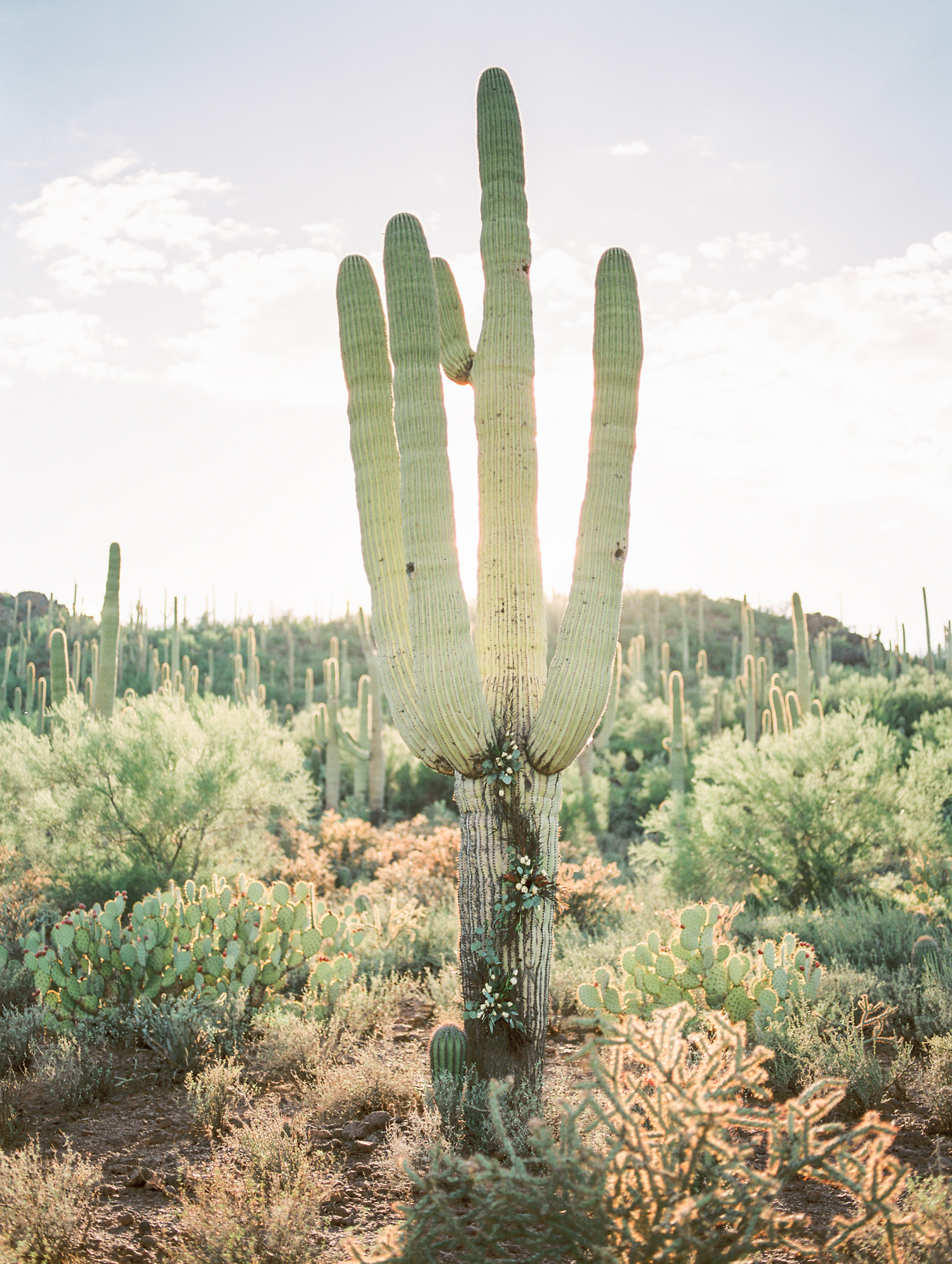 Beautiful floral saguaro cactus installation by Alexis Grace Florals