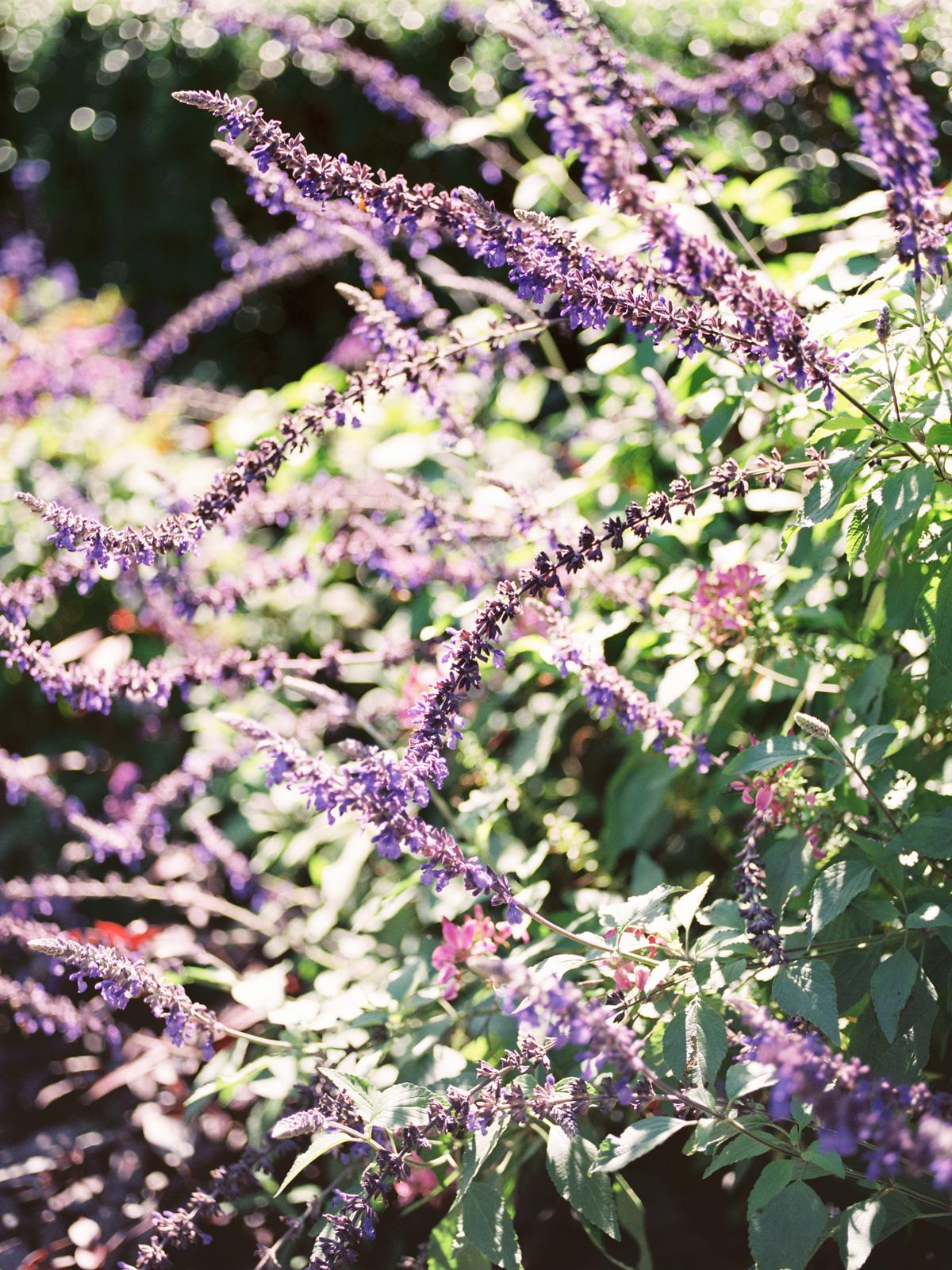 lavender-NYC-conservatory-garden.jpg