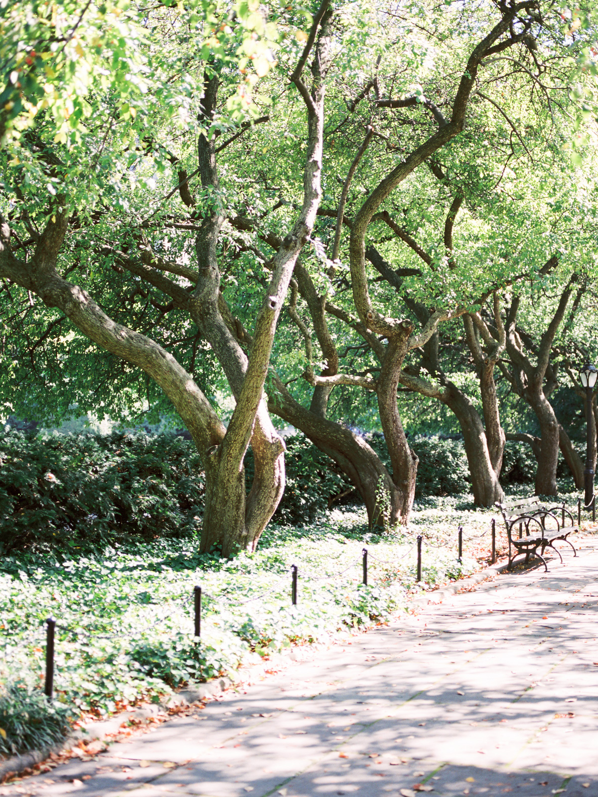 New-york-conservatory-garden.jpg