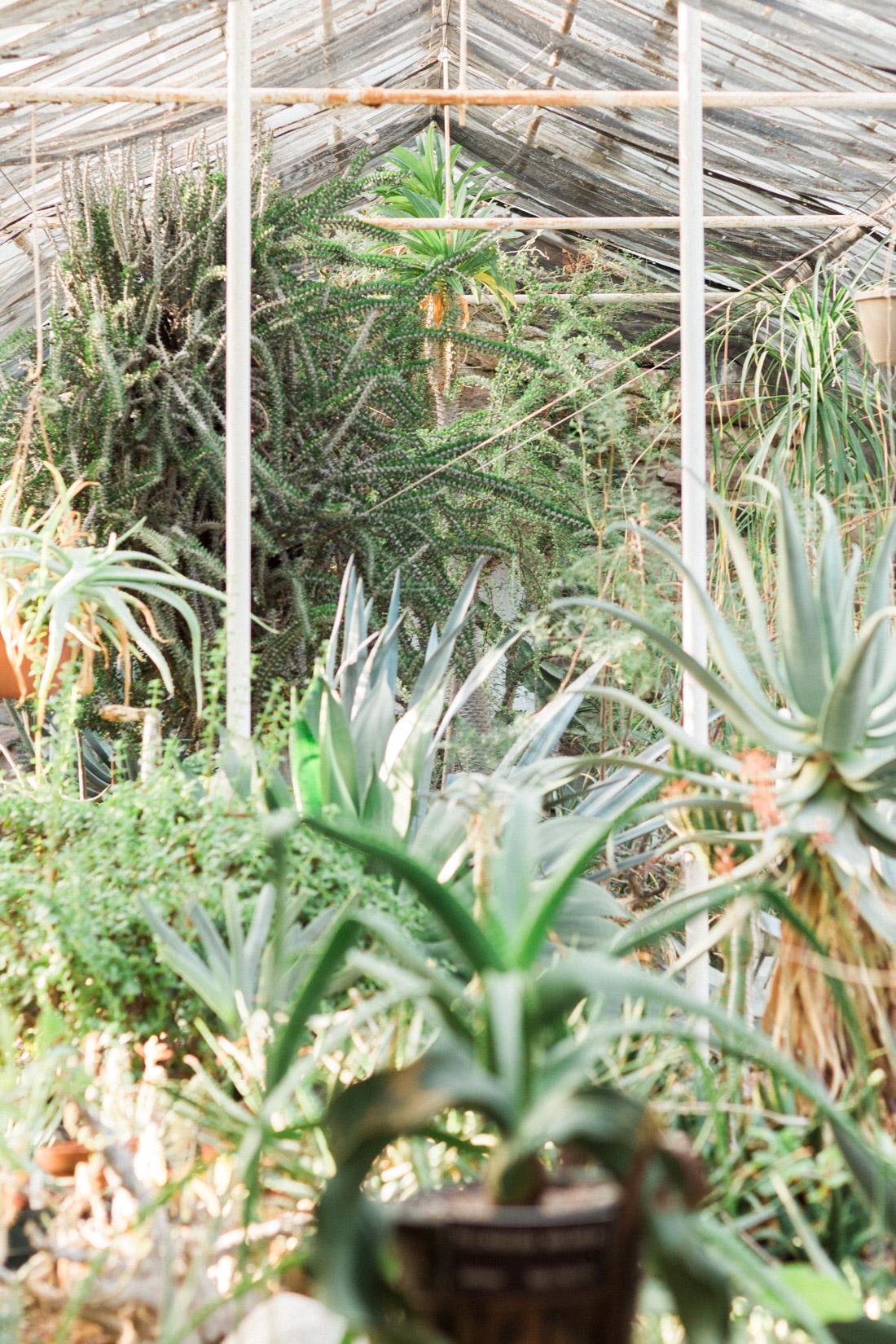 boyce-thompson-arboretum.jpg