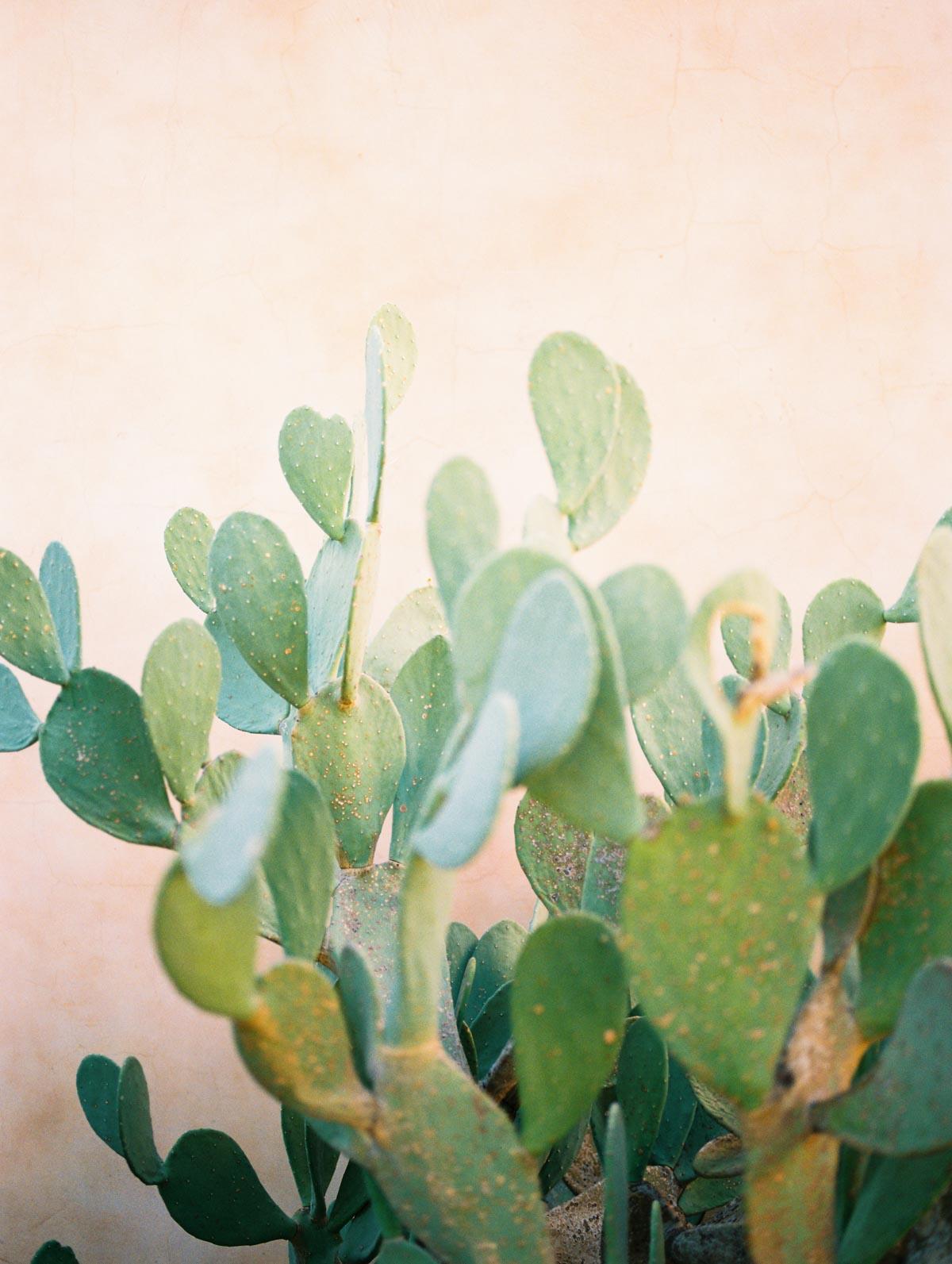 prickly-pear-cactus.jpg