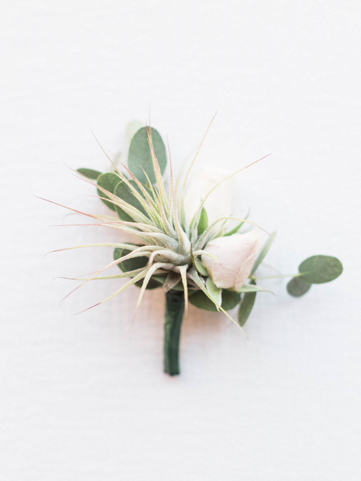 Air plant boutonniere captured by Tucson Wedding Photographers Betsy & John