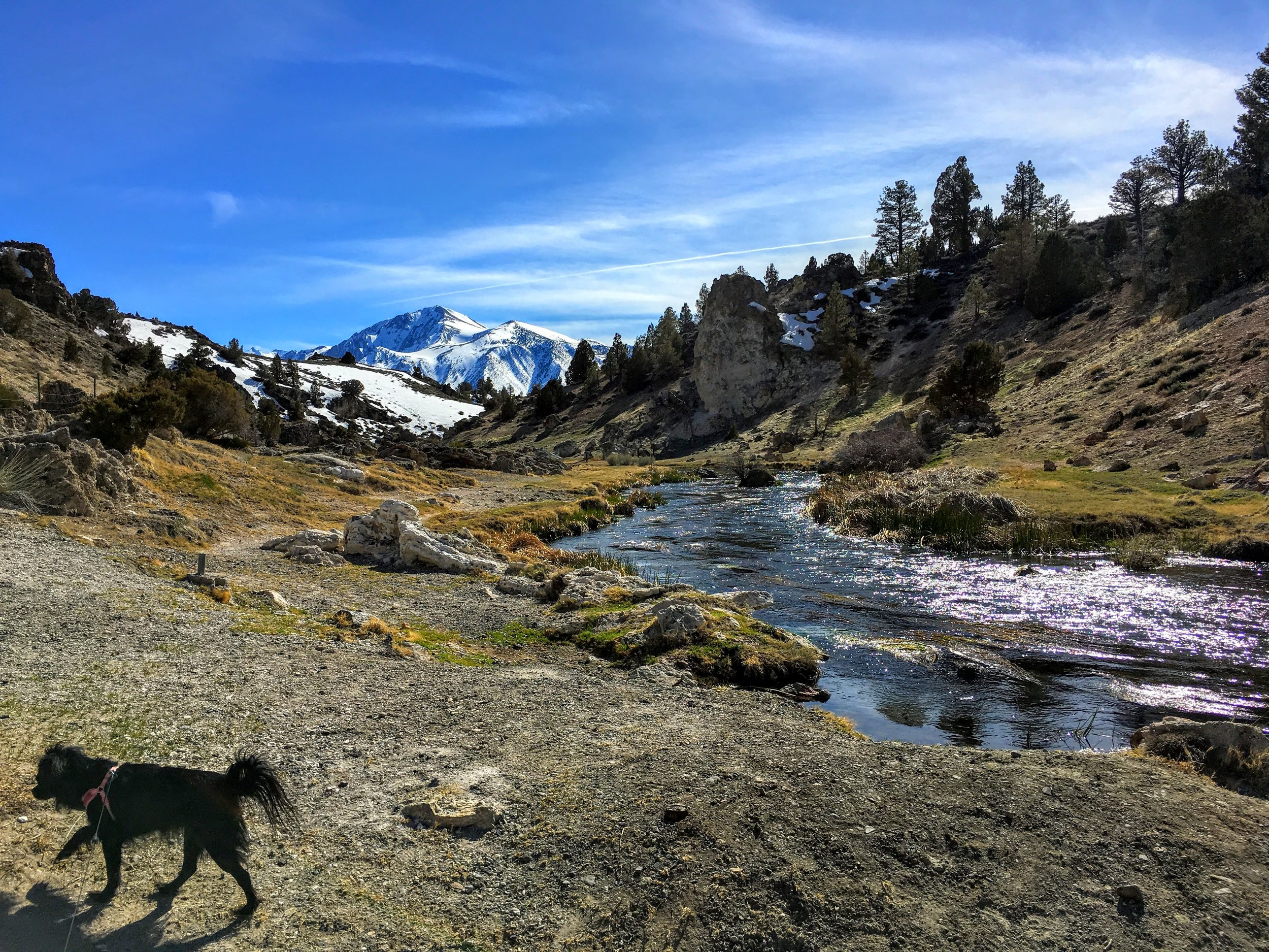 Beautiful Hot Creek (lives up to its name), a few miles from our current apartment in Mammoth.