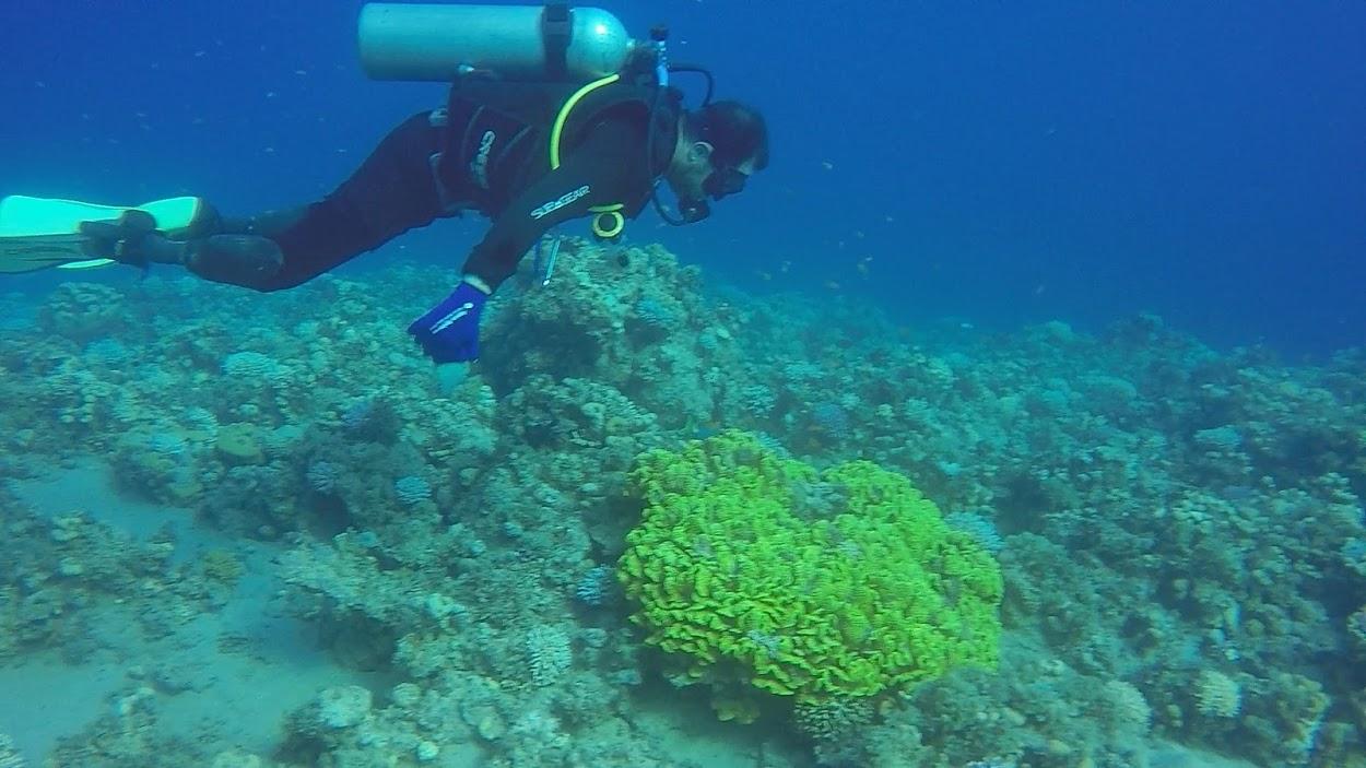 SCUBA diving Dahab Egypt Sinai