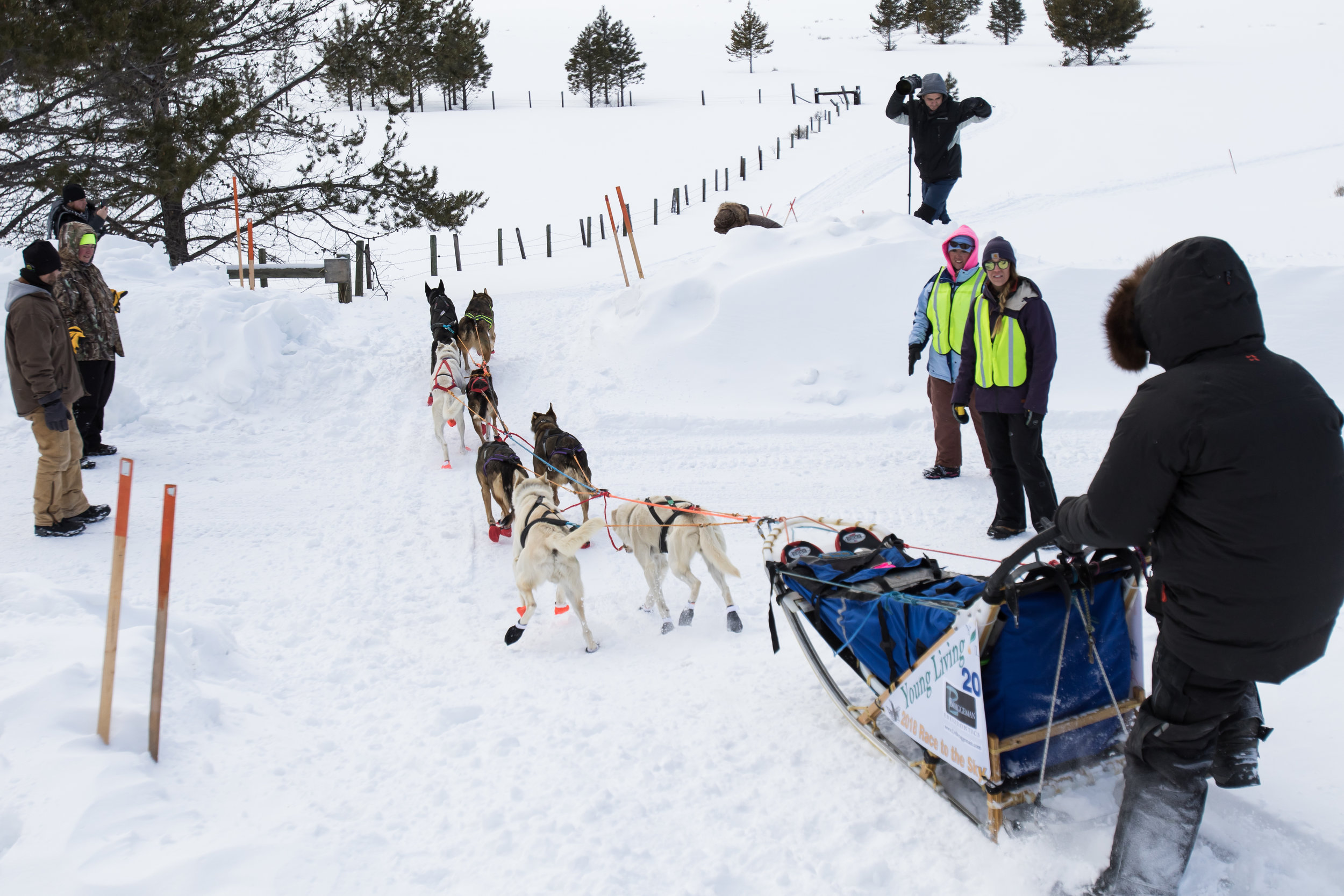 A musher crosses the street with his sled dogs to the cheers of the volunteers monitoring street traffic.