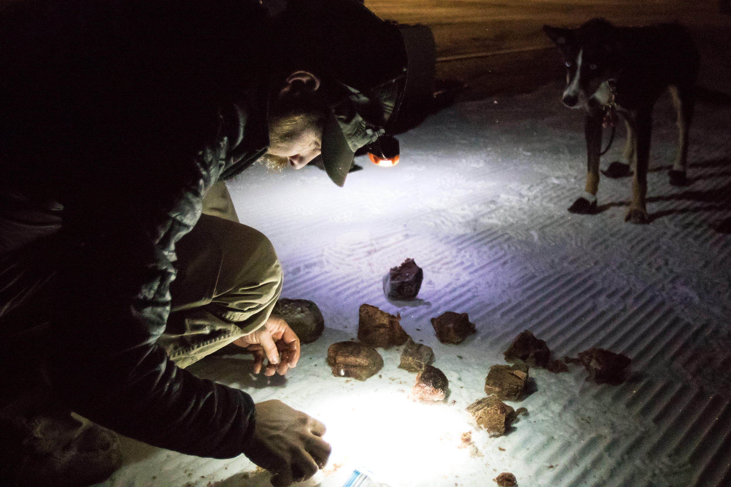 """300-mile musher Damon Ramaker portions out what he calls """"mystery meat"""" for his dogs late Saturday night at checkpoint one."""