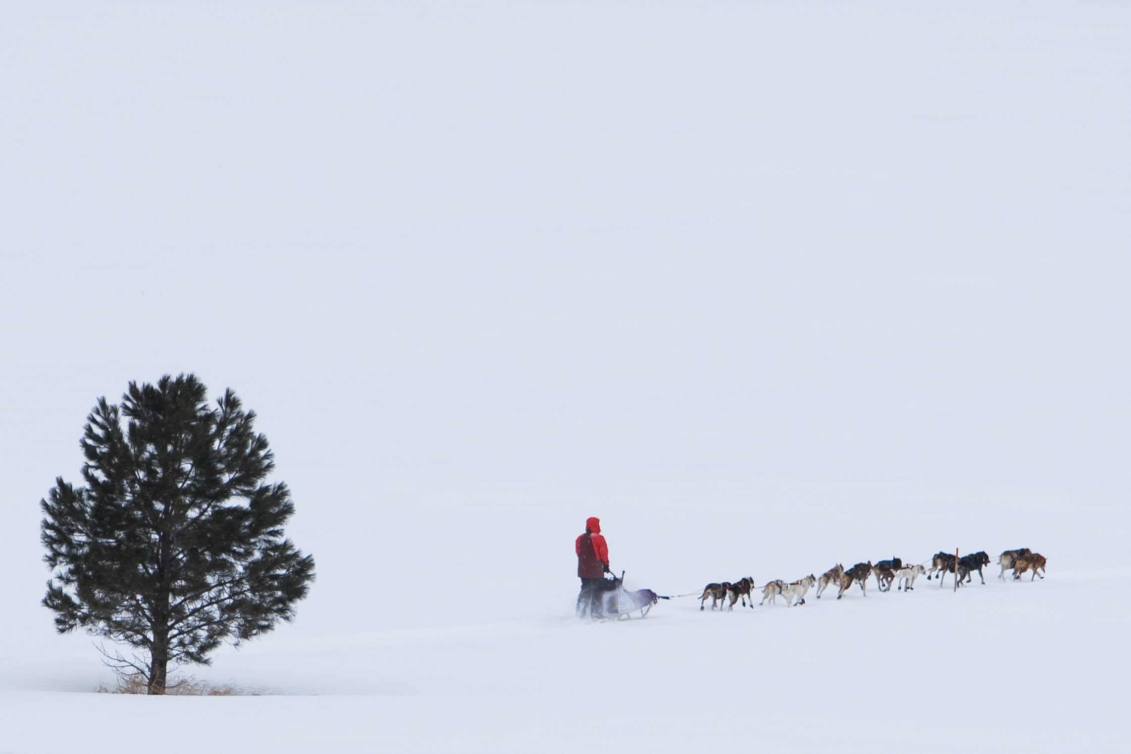 A musher makes his way through the course during the Race to the Sky sled dog races in Lincoln, Mont. on Feb. 10, 2018. (Lacey Young, Missoulian & Helena Independent Record)