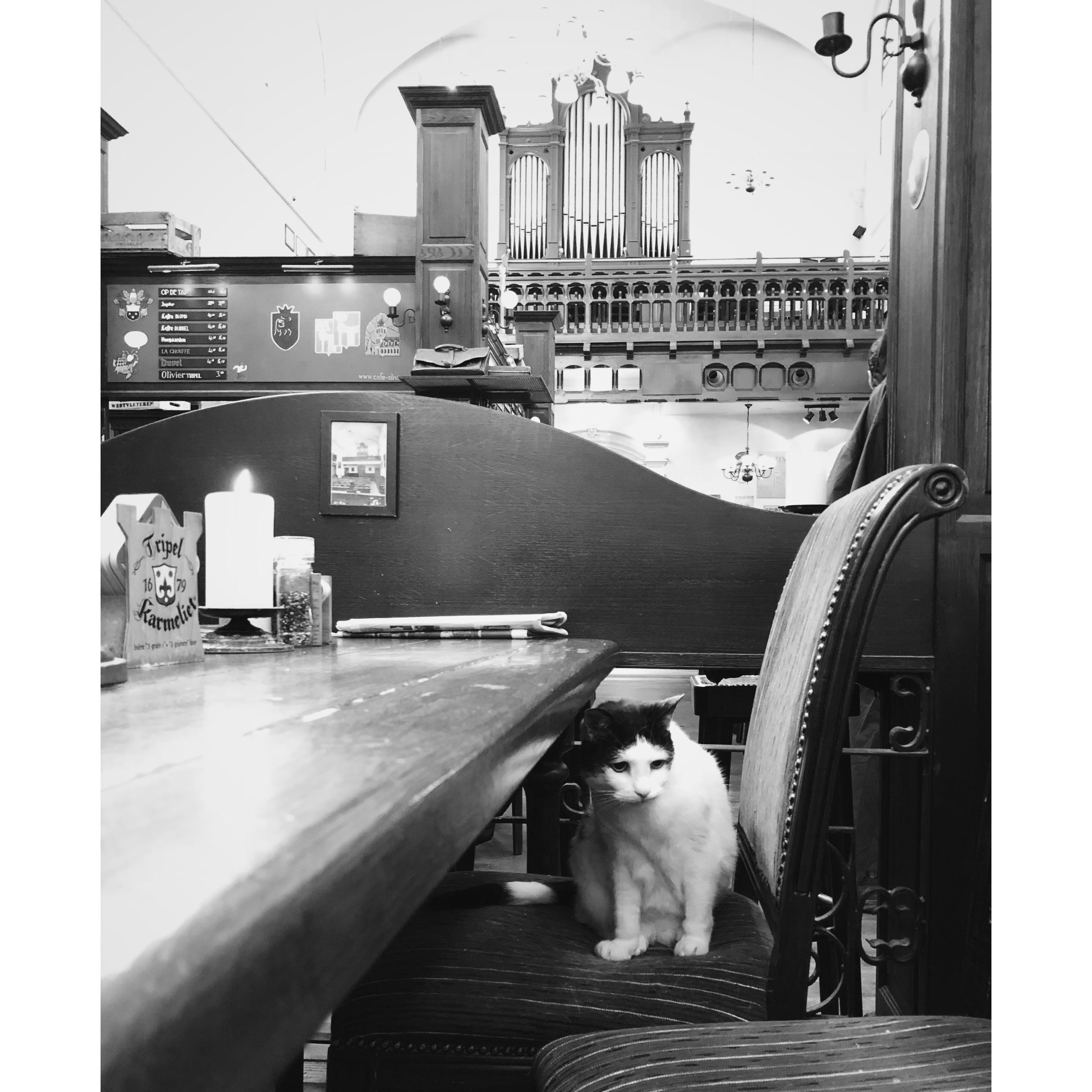 Bar cat at Belgisch Biercafé Olivier; Utrech, Netherlands.