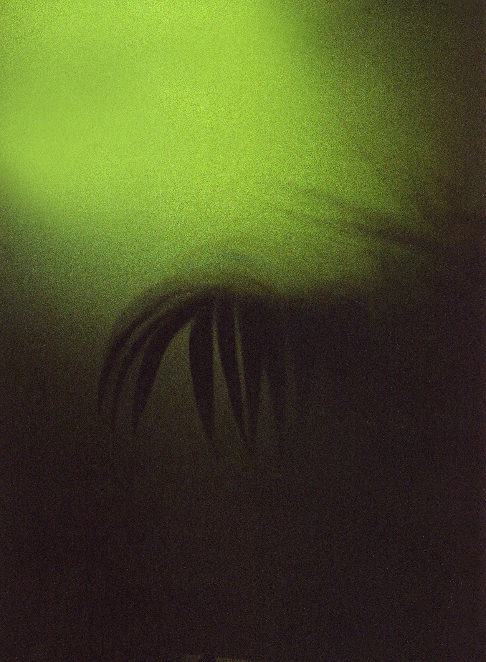 22 leafy greens copy.jpg
