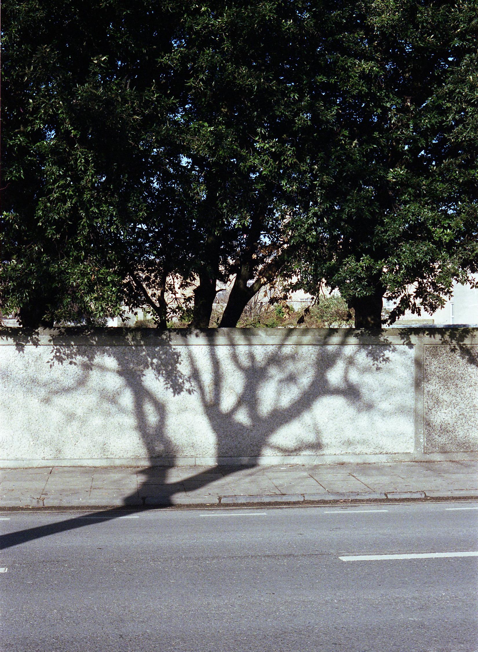 39 trees copy.jpg