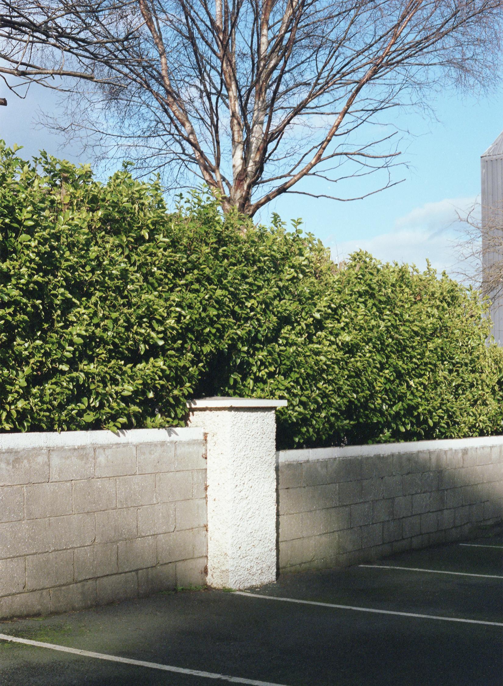 40 greystones tree copy.jpg