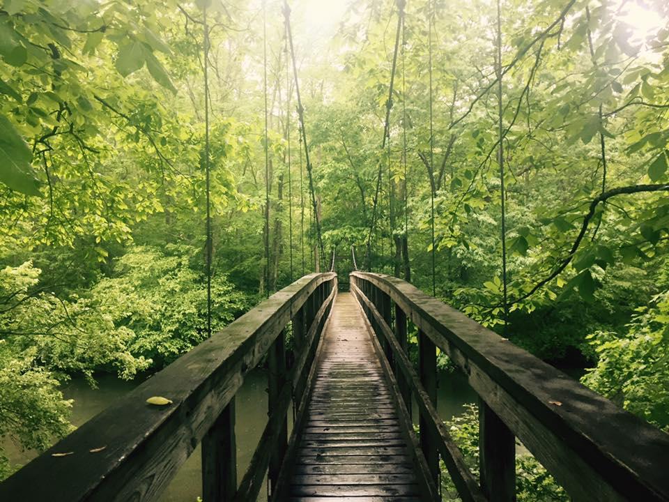 Appalachian trail: photo by ian matta