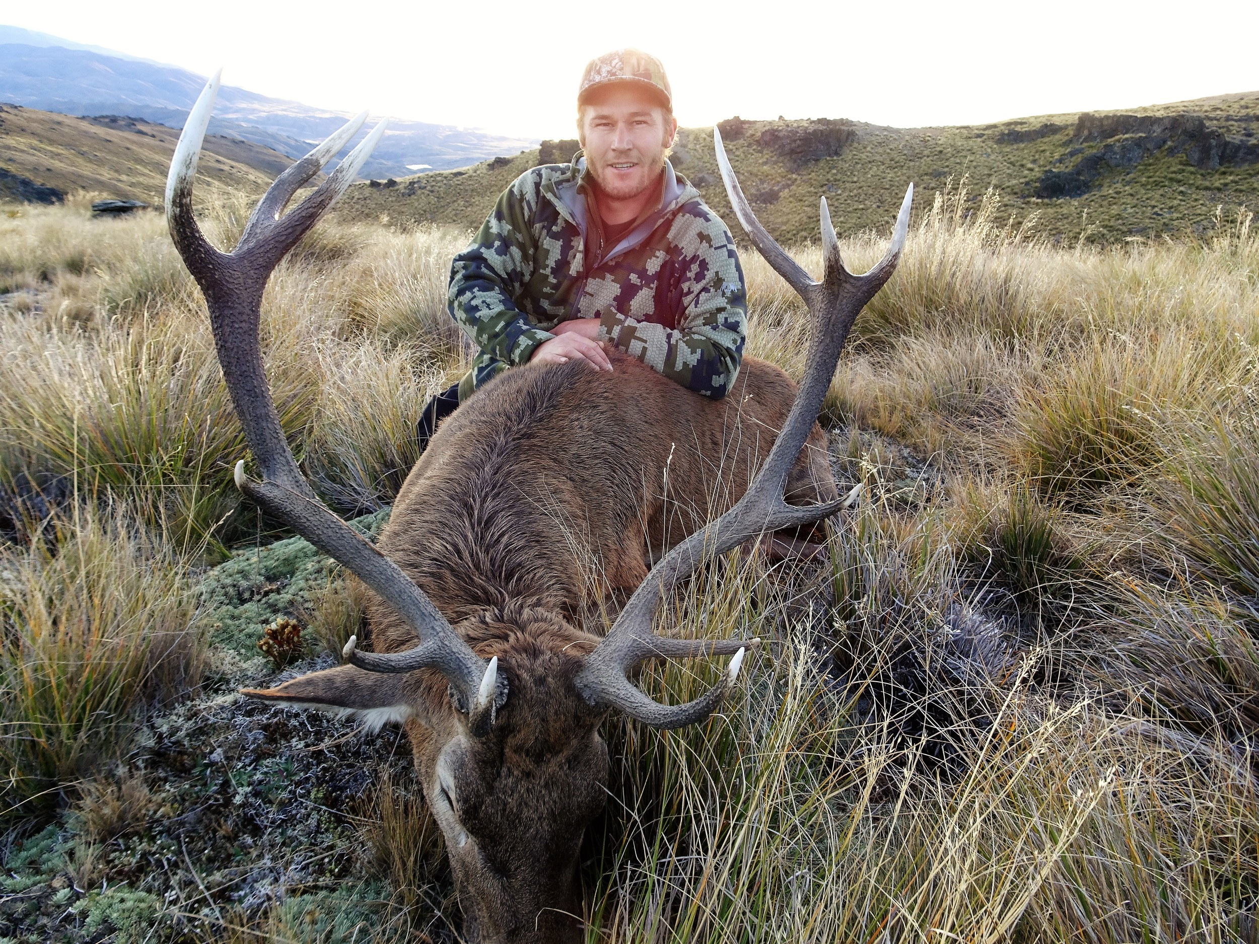 12 point stag