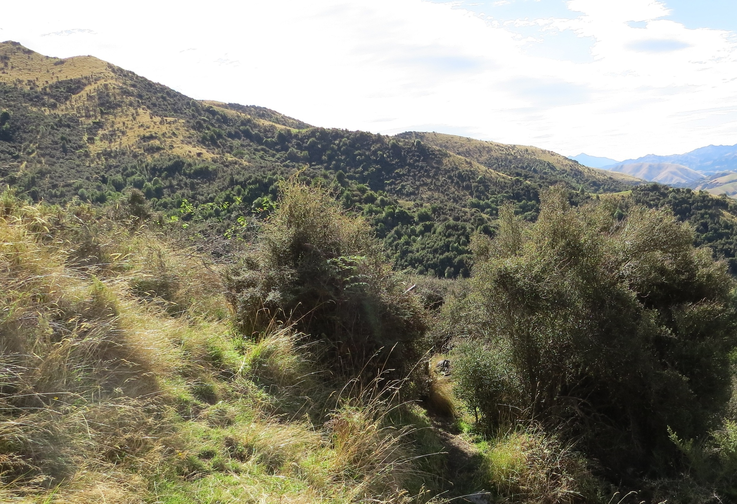 Some great hunting terrain in the Central South Island - Photo by Ryan Carr