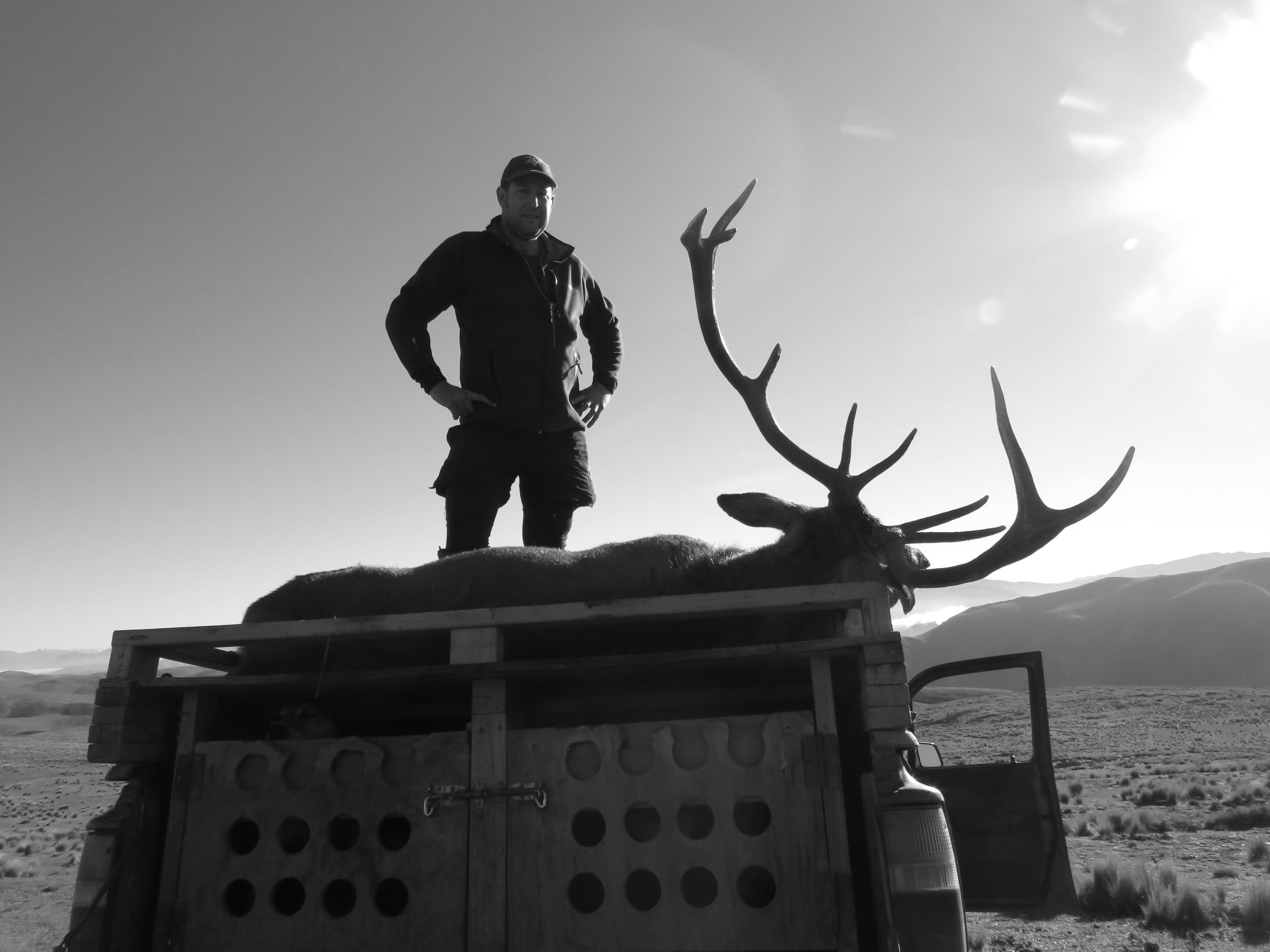 Sparky's whole stag loaded onto the back of the Hilux.